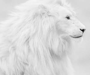 animal, theme, and white image
