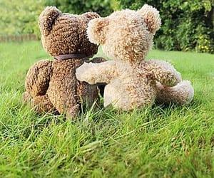 bear, beautiful, and bears image
