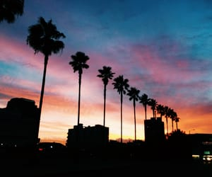 california, palm, and pink image