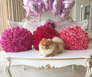 dog, flowers, and rose image