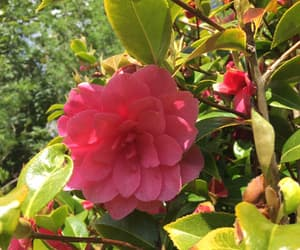 adventure, garden, and pink image