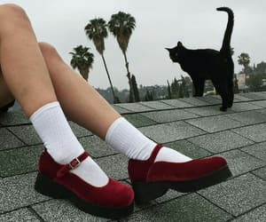red, shoes, and cat image