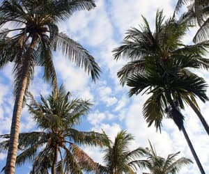 palmtrees, paradise, and sky image