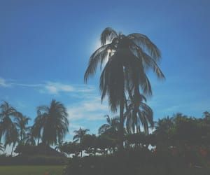 artsy, palm, and photographer image