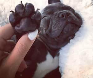 bulldog, dog, and french image