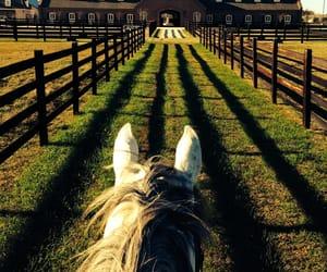 barn and photography image