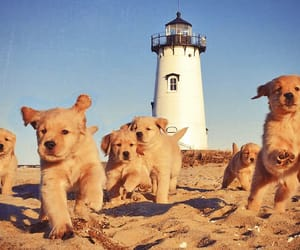 animals, puppy, and summer image