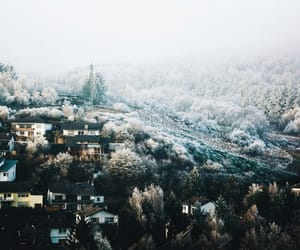 beauty, frost, and nature image