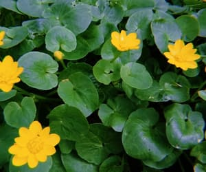nature, yellow, and flowers image