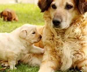 animals, puppies, and canines image