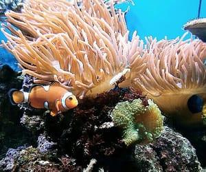animal, sea, and fish image