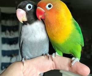 animal, birds, and cute image