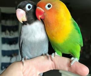 animals, bird, and birds image