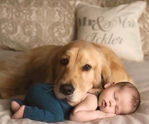 baby, dog, and animal image