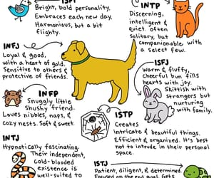 introvert, intp, and infj image