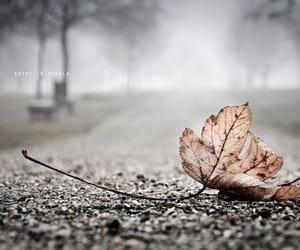 autumn, leaf, and orange image