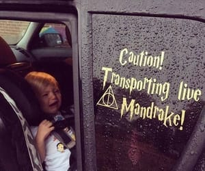 funny, harry potter, and movies image