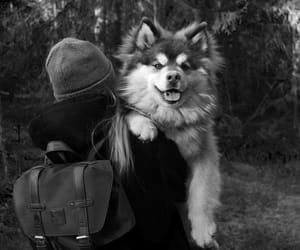 dog, pup, and wanderlust image