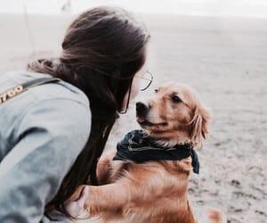 animal, girl, and ocean image