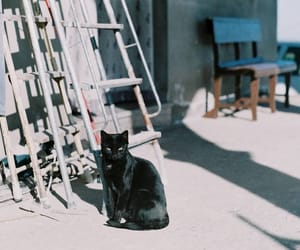 cat, zenit, and zenit 12xp image