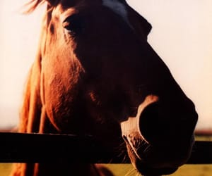 horse, zenit 12xp, and lomo image