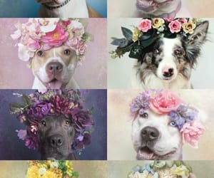 dogs, flores, and coroas image