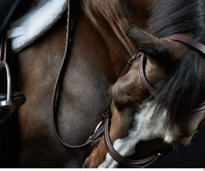 bit, equestrian, and equine image
