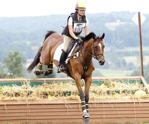 equestrian, pony, and xc image