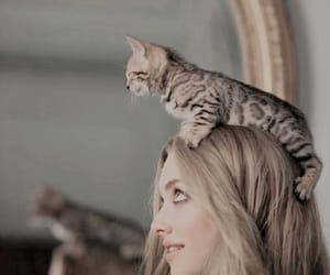 cat, amanda seyfried, and blonde image