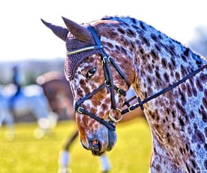 bridle, dressage, and equestrian image