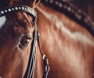 bridle, camera, and equestrian image
