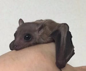 bat, cute, and animal image