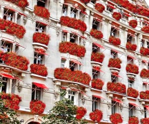 flowers, goals, and hotel image