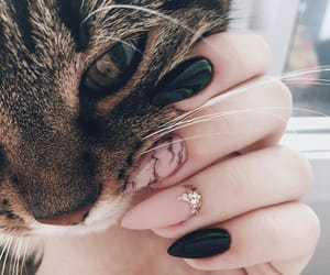 nails, beauty, and cat image