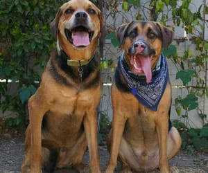 Animales, beautiful, and dogs image