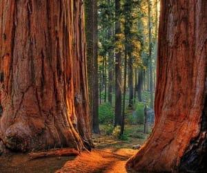 bosque, arboles, and belleza image