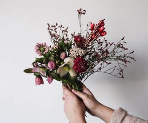flowers, photography, and random image