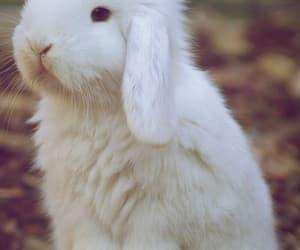 animal and rabbit image