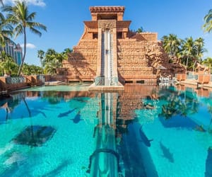 palm trees, sharks, and pool image