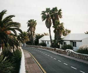 beach, palm trees, and road image