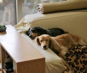 cute, dog, and sleep image