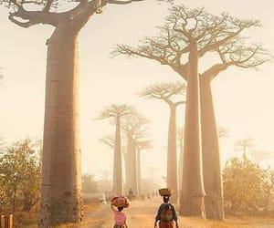 arbre, Dream, and voyage image