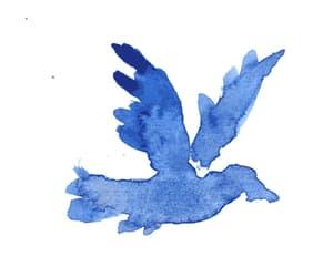 bird, gif, and blue image