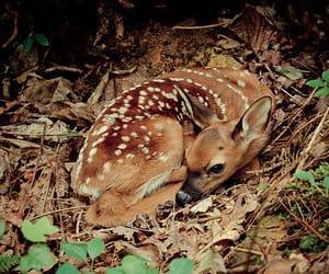 amazing, animals, and nature image