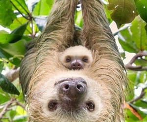 animals, sloth, and baby image