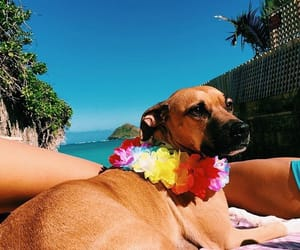 dog, tropical, and summer image