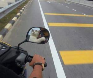 cat, moto, and motorbike image
