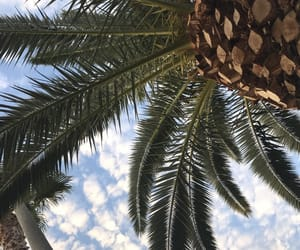 palme, Sonne, and summer image