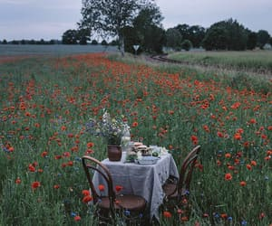 country, poppies, and open air image