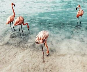 flamingo, goals, and gorgeous image